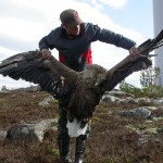 How Long Before the Golden Eagle  Goes Extinct Because of Wind Turbines?